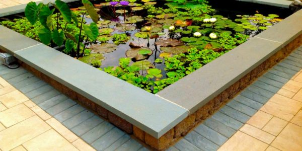 above ground lily pad pond