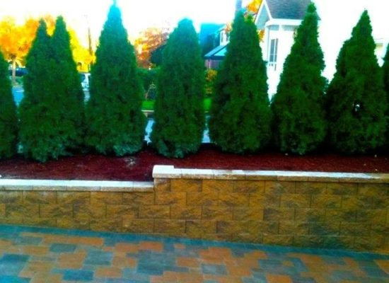 retaining wall with shrubs